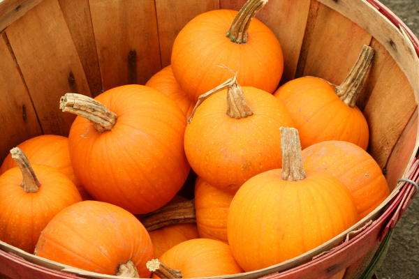 pumkins, nutrtion, health, employee wellness, nifs